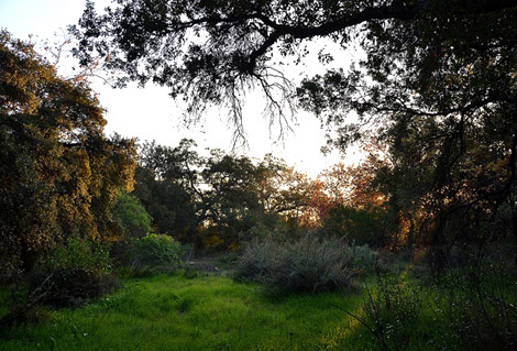 Arcadia Woodlands Threatened